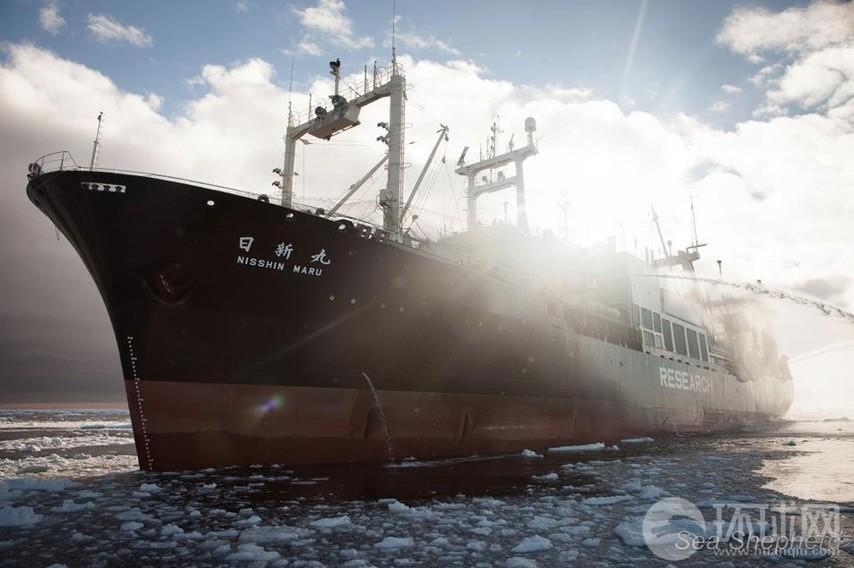 高清:荷兰反捕鲸船遭日本军舰
