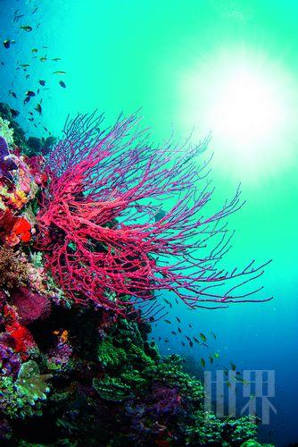 截然不同的水下世界 马来诗巴丹惊魂一潜(组图)
