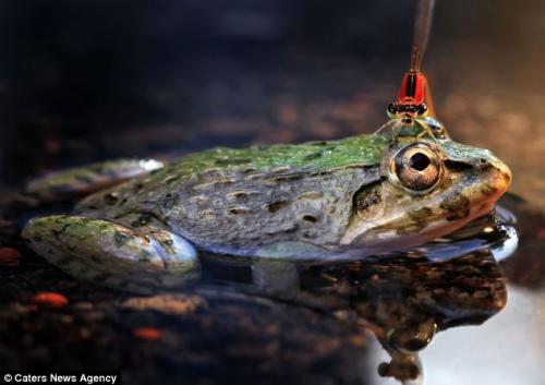 青蛙蹲坐在池塘内纹丝不动