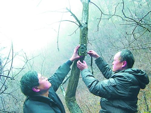 焦作市野生动植物保护救护站的工作人员在安装红外线照相机。