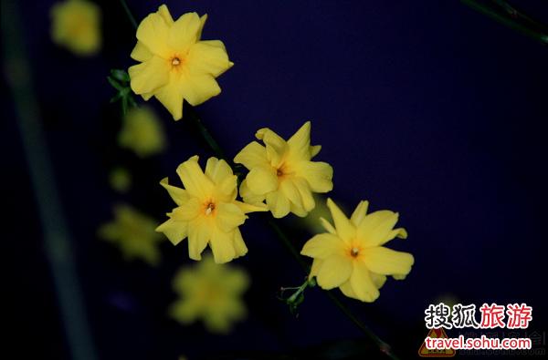 中山公园唐花坞赏花