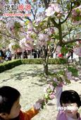 鲜花阳光不等人 北京春游城区篇