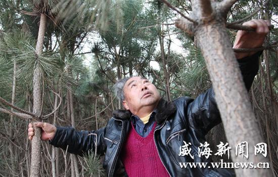 松树种类名称及图片_松树种类名称_松树的种类; 威海老人欲捐出松树林