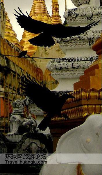 视乌鸦为神鸟