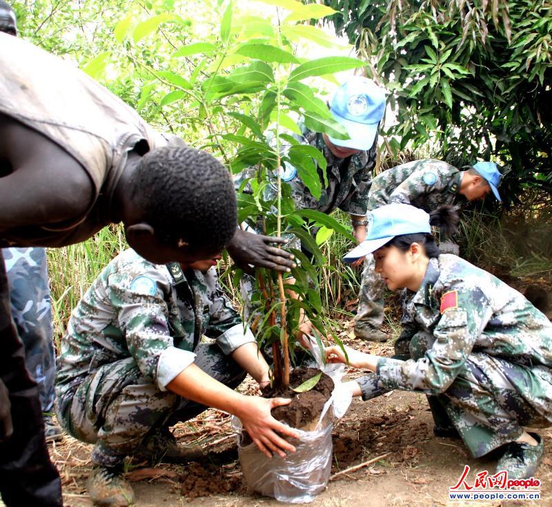 中国维和官兵在巴比拉部落酋长拉比的芒果林中开挖树苗 史成军摄