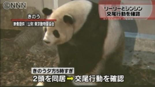 女子与动物性交视频_【环球网综合报道】据日本《产经新闻》3月12日报道,日本东京上野动物