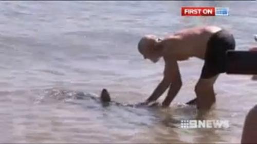 保罗・马思德抓住一条鲨鱼的尾巴,将其拖离海滩(视频截图)
