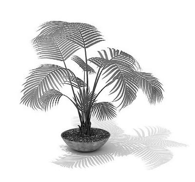 凤尾竹或悬挂1-2盆吊兰以示