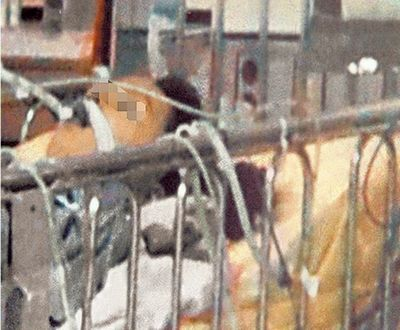 台湾14岁少女遭灌半瓶高粱酒昏迷20天不治 图 搜狐福建图片
