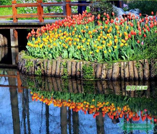 杭州太子湾公园 怒放郁金香