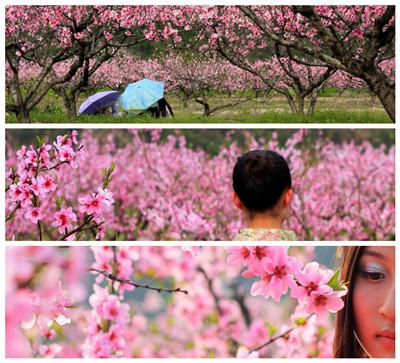 在那桃花盛开的地方曲谱