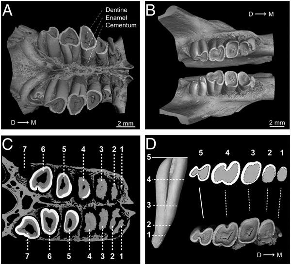 学家用一种x光ct扫描建立 -正常颈椎x光片图 不正常颈椎x光片图,颈图片