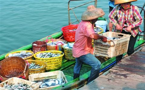 此举标志着我国已启动对南沙渔业资源的新一轮调查.
