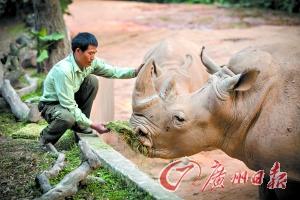 动物饲养员_动物饲养员贺景昭与国宝的快乐生活