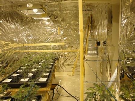 嫌犯绕过电表,偷电种植大麻。(警方提供)