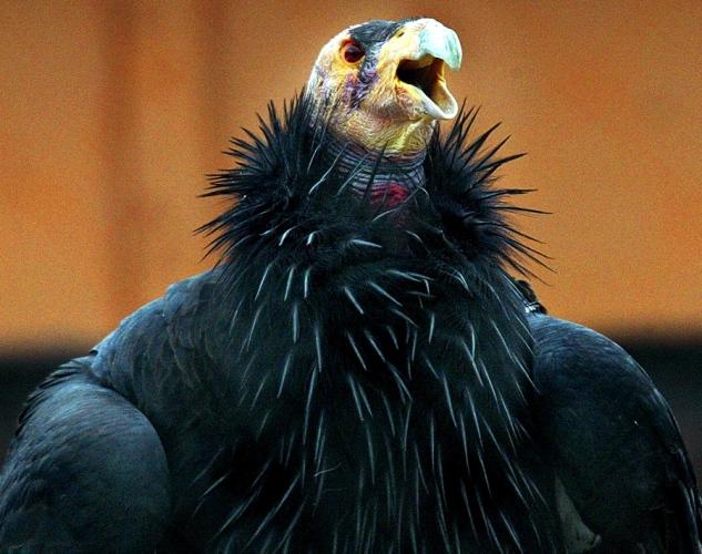 盘点动物世界的 丑陋达人 自然地理