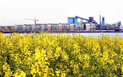 3月25日,位于安徽省淮北市烈山区国家矿山公园内,近处盛开的油菜花
