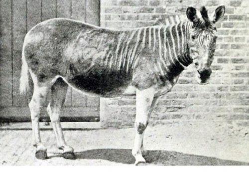 活24种灭绝动物(图)