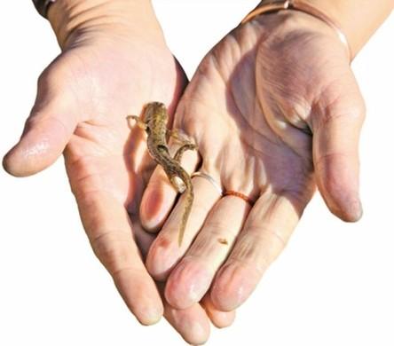 石头捕鼠陷阱制作图解