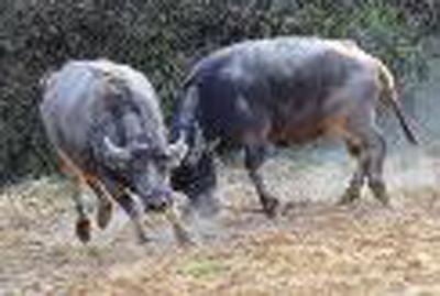 2013年各国外汇储备_普京把金砖五国比喻5种动物 引网友热猜(图)-搜狐滚动