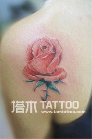 塔木纹身 时尚纹身 女性纹身 玫瑰花纹身; 小清新纹身 小清新纹身图
