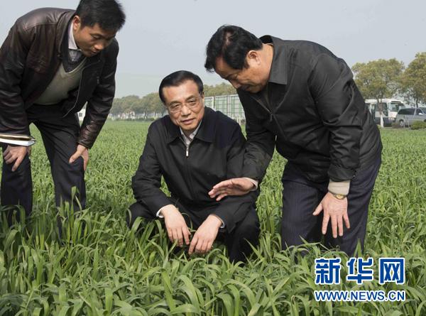 3月27日至29日,中共中央政治局常委、国务院总理李克强先后到江苏、上海考察。这是3月28日,李克强在江苏省常熟市田娘家庭农场察看麦苗长势。新华社记者 李学仁