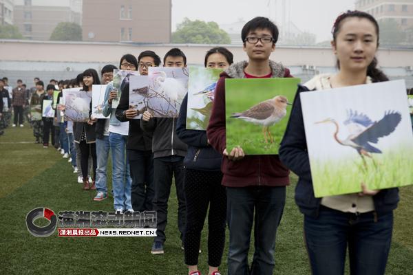 """(4月1日,湖南涉外经济学院,由438名学生志愿者分别扮演湖南境内的438种鸟类的""""爱鸟多米诺""""活动,将整个爱鸟周的活动推向了高潮。图/潇湘晨报滚动新闻实习记者 蒋丽梅)"""
