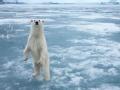 暗战北极圈