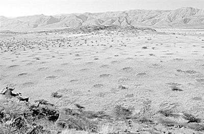 """解密非洲沙漠""""精灵圈地"""" 白蚁啃食或是形成根源"""