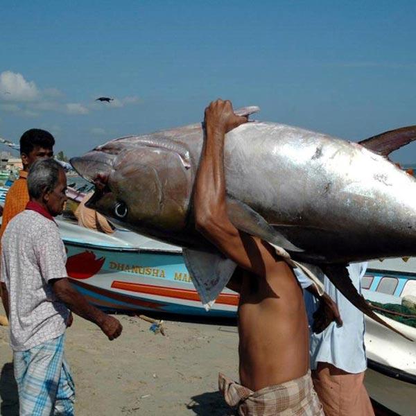 斯里兰卡鱼市
