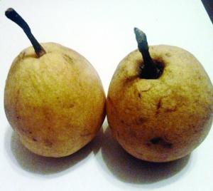 半年 梨子 防腐剂/这就是不烂的梨子网络图片