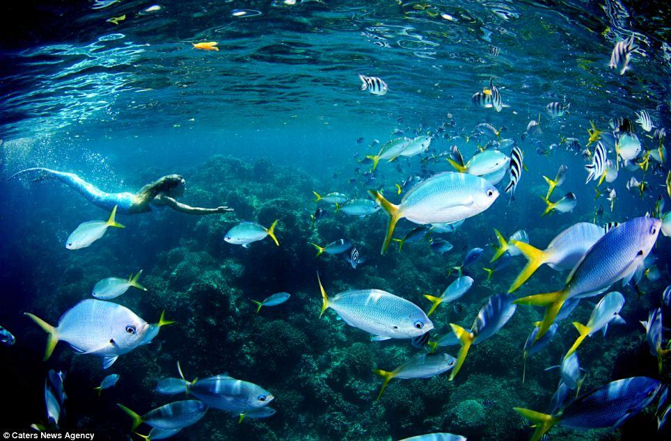 美国女子耗资10万元扮美人鱼 宣传海洋保护
