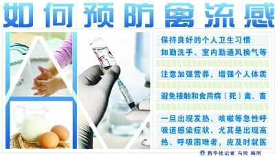 专家支招防范禽流感
