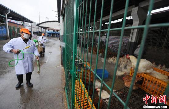 上海决定从4月6日起,在全市范围内暂停活禽交易,关闭所有活禽交易市场。图为在上海三官堂活禽交易市场,工作人员正对市场进行全面消毒。曹磊 摄 CFP视觉中国