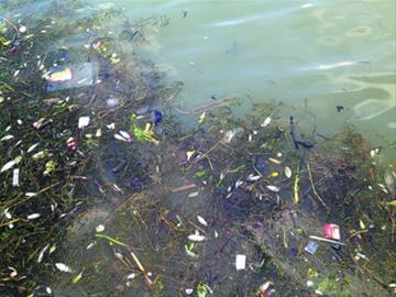 死于三天之内_上海泗泾塘三天打捞五六百斤死鱼 疑是非法电鱼-搜狐新闻