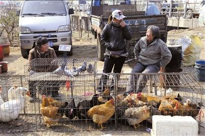 昨天,在北京市郊北六环外集市中,仍有商贩在交易活禽,但却鲜有市民前来购买。中新社发