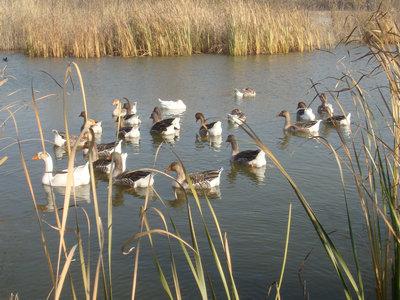 京郊观鸟地推荐 野鸭湖