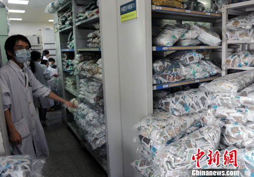 4月13日,一名中药师在福建省第二人民医院中药房向记者展示用于预防人感染H7N9禽流感的芦根、大青叶中药饮片。中新社发 刘可耕 摄