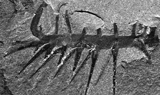 比恐龙更怪异史前动物 猛犸象被复活 组图 1 科学探索 光明网