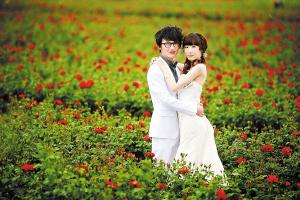 一对新人在八街玫瑰基地拍摄婚纱照 昆明韩国爱巢摄影