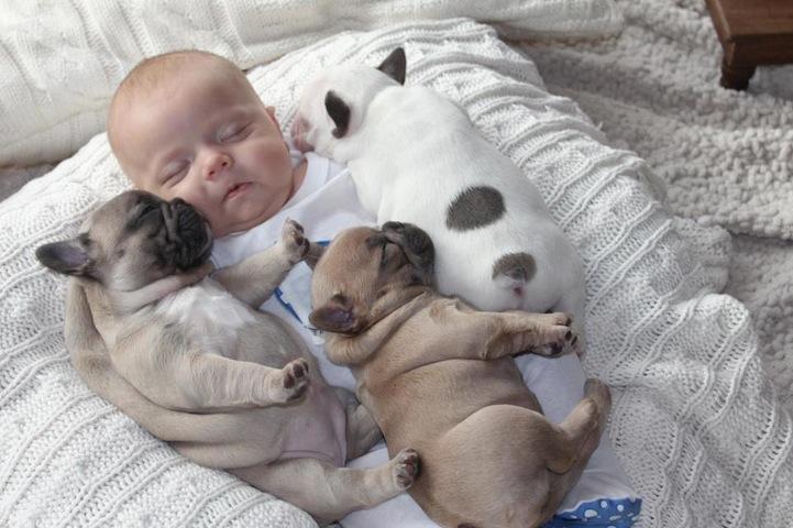 一组小奶娃和小斗牛犬拥眠的照片风靡网络。照片中的这个小婴儿才3个月大,而这3只小法国斗牛犬来到这个世界也才3周,这两种萌物聚在一起,其治愈效果是不言而喻的。照片中,3只幼犬或相互依偎在小奶娃的身边睡觉,或亲昵地亲吻奶娃的脸颊,或带着些许好奇看着这个世界画面如此和谐有爱,任何言语在这里都是多余的。 照片的拍摄者是小奶娃奥斯丁(Austin)的姑妈辛迪克拉克(Cindy Clark),她是美国宾夕法尼亚州的一名狗饲养员。据克拉克说,现在三只小斗牛犬都已经被领养了,但是应广大网民要求,她还会为侄子再