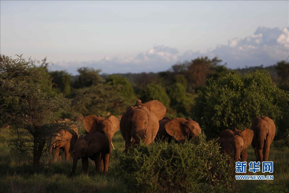 桑布鲁国家公园野生动物印象(高清)