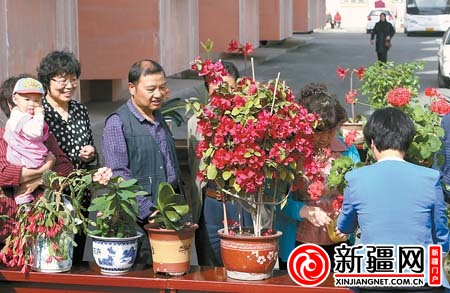 鲜花 乌鲁木齐/4月25日,辖区居民在对家庭盆栽鲜花进行现场评比。