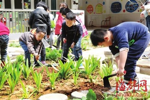 幼儿园种菜记录图片