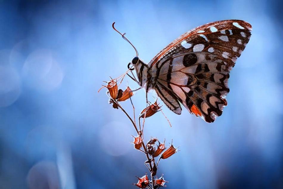 令人惊艳的动物微距摄影作品(组图)