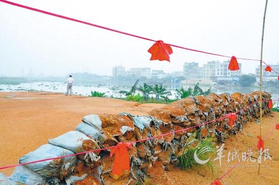 汛期已至,金关围堤防工程仍有10%工程量未完工,仍存在8.6公里险段