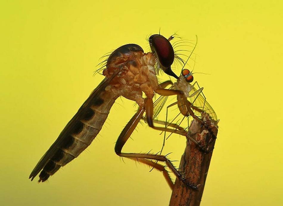 动物微距摄影令人叹为观止