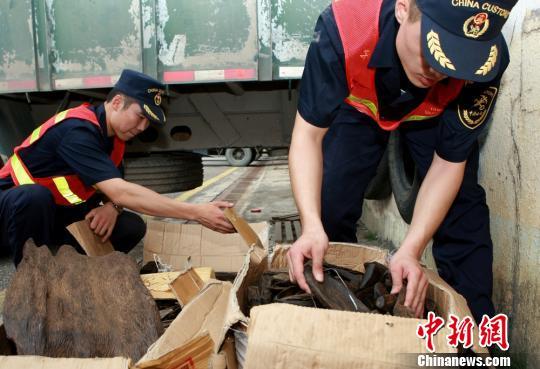 8日,拱北海关下属的横琴海关在珠海横琴口岸查获一起土沉香走私案,收缴隐藏在车底的145公斤土沉香 俞波 摄