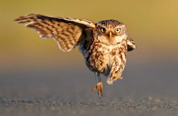 手绘森林鸟