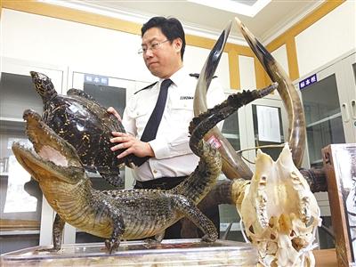 昨日,北京出入境检验检疫局检验检疫技术中心,工作人员在展示从首都机场旅客行李中截获的部分禁止入境物品。新京报记者 廖爱玲 摄